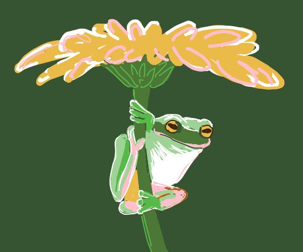 cute fwoggy on a flower