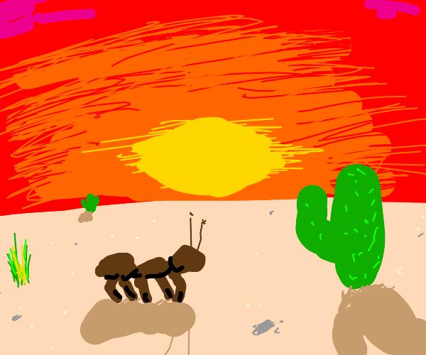 Ant in the desert