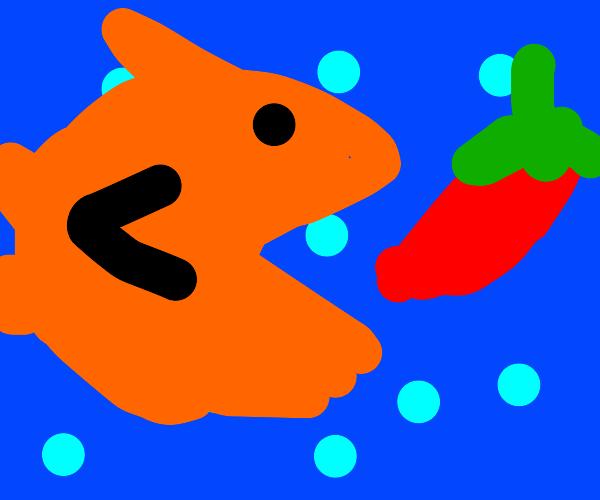 fish eats a chili pepper
