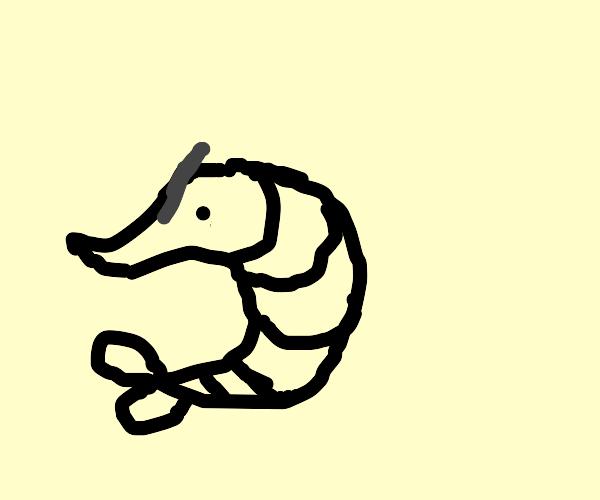 Angry Shrimp