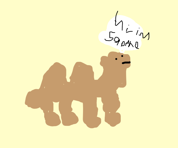 camel says their name is sappho