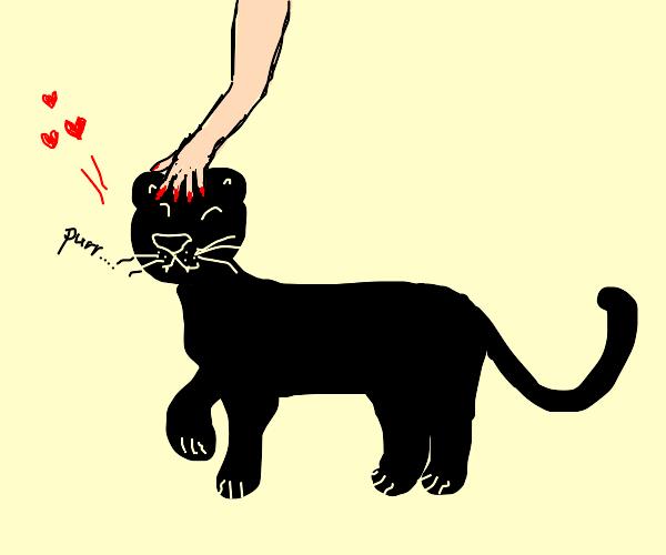 Black panther loves being pet