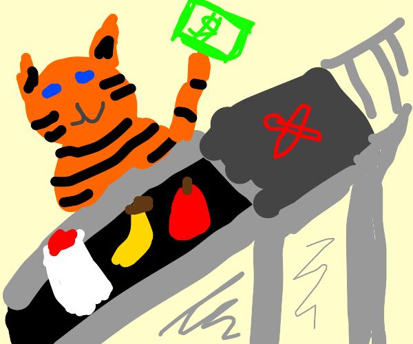Orange Tabby working as cashier