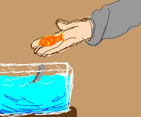 Feeding your pet eel a fish