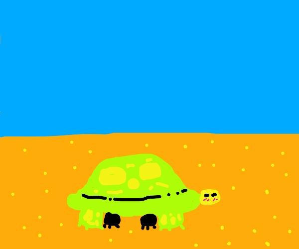 beautiful turtle