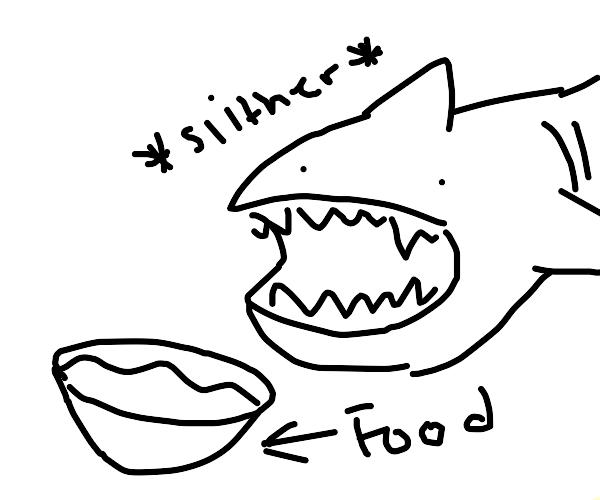 Feeding the shark