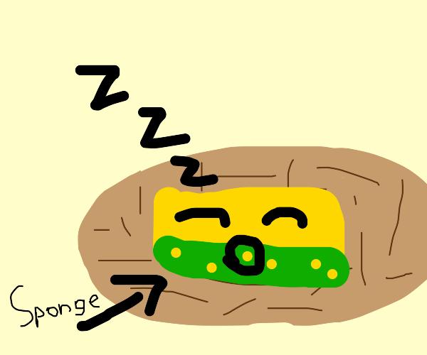 Sponge in a Nest