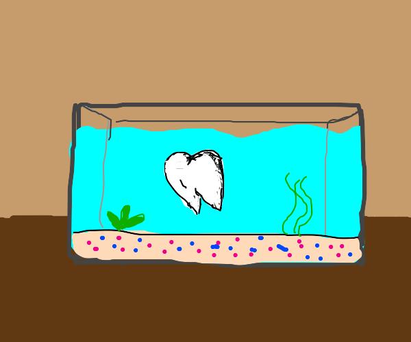Tooth in an Aquarium