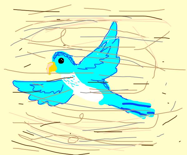 Parakeet in a Dust Storm