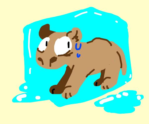 Frozen Capybara