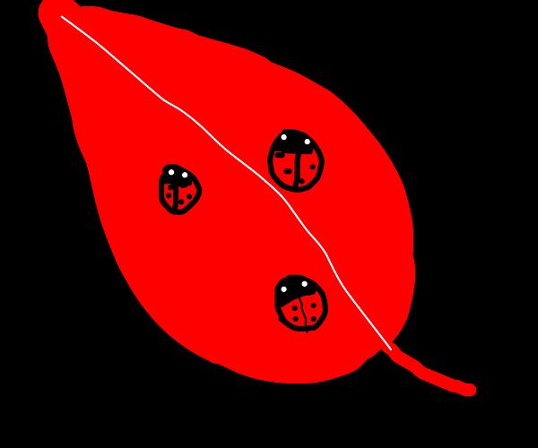 Lady bugs on red leaf