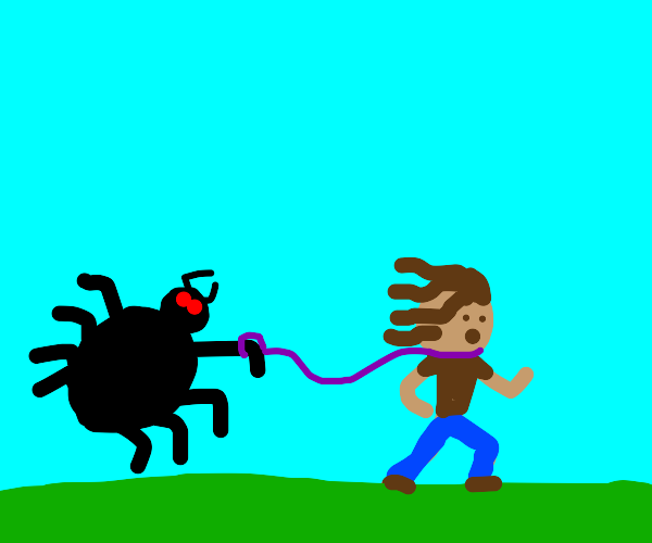 Spider has human on leash