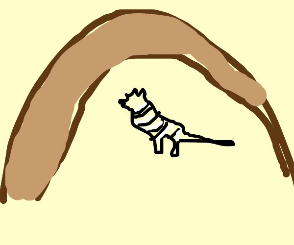 Zebra in a Cave