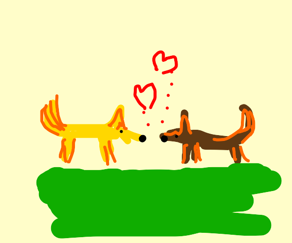 Yellow and Brown foxes love each other