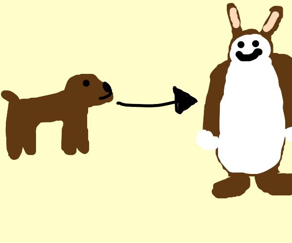 dog becomes chungus