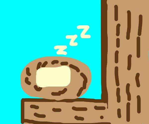 butter is sleeping in a nest