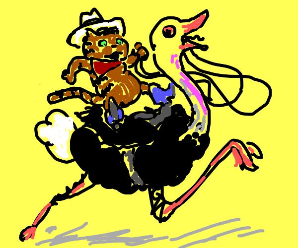 a cowboy cat riding on an ostrich