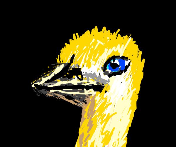 golden ostrich