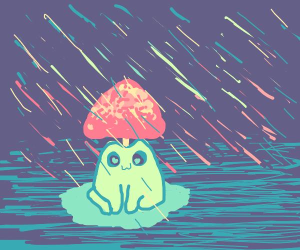 frogshroom in the rain