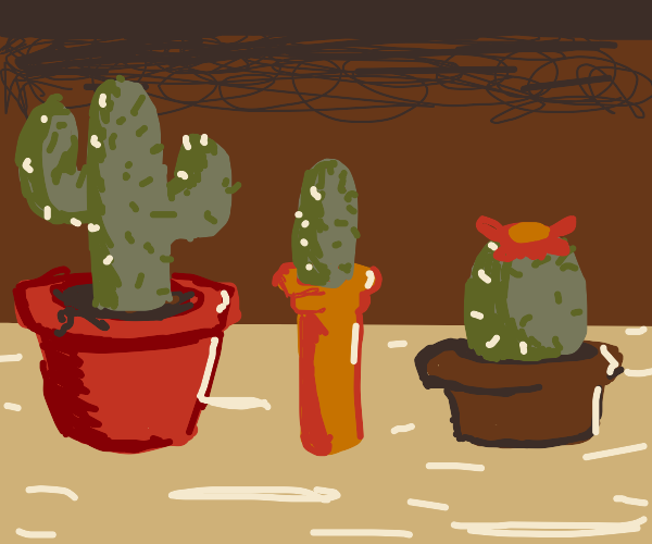 Various sized pots with different cacti