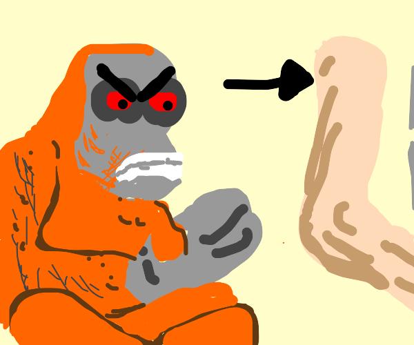 Ape hates Foot