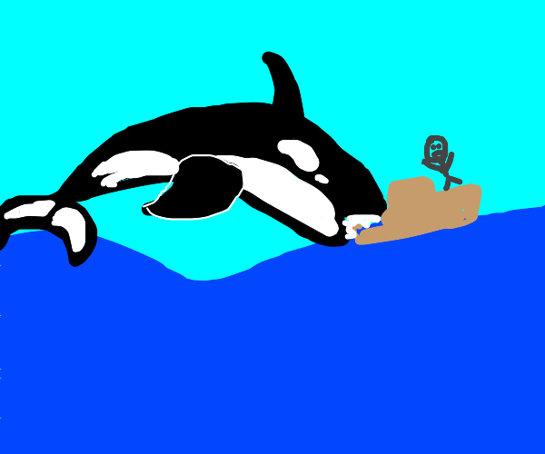 Orca eating a boat