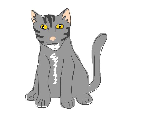Grey tabby cat sitting up