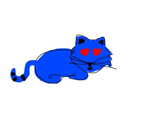 heart eyed blue kitten