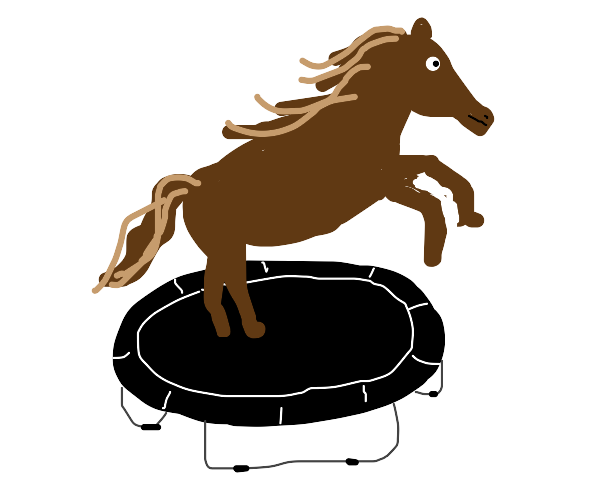 horse jumping on a trampoline