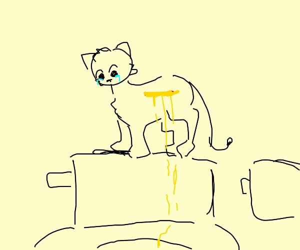cat crying and bleeding pee on the toilet