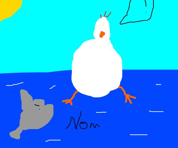 Shark eating a fat chicken