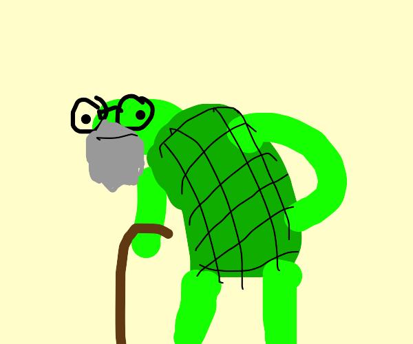 Senior turtle