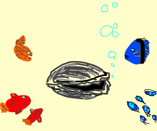 Fish gather around to look at an oyster