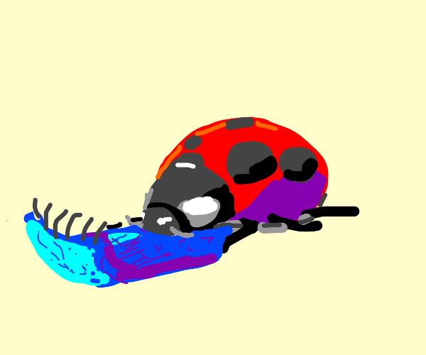 Ladybug eating towelie