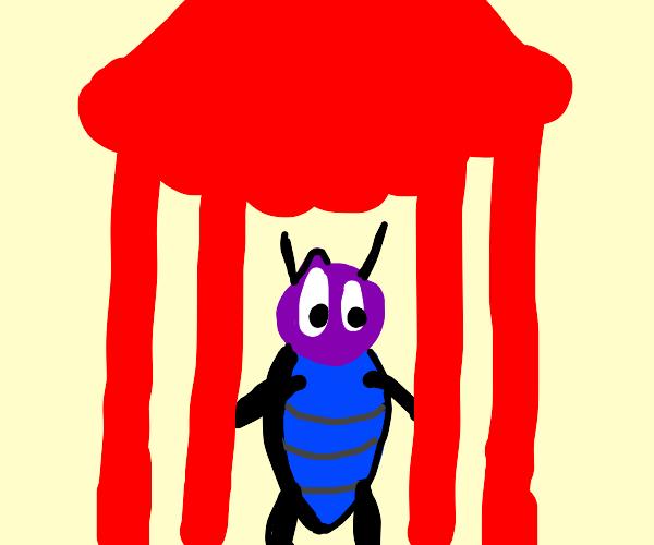 Pet Cricket
