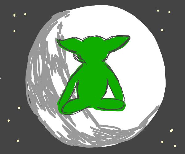 Yogi Yoda