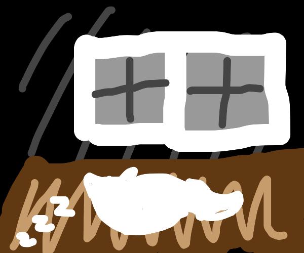 Cat sleeps near window during night
