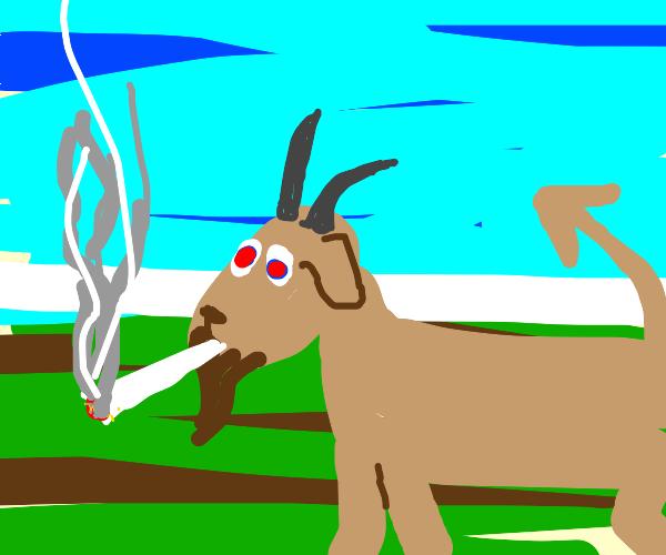 Demon goat is smoking weed