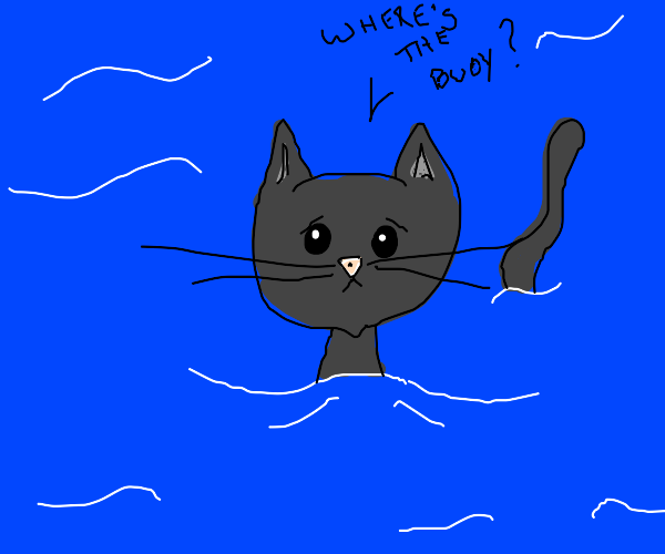 a cat swims in the water without a buoy