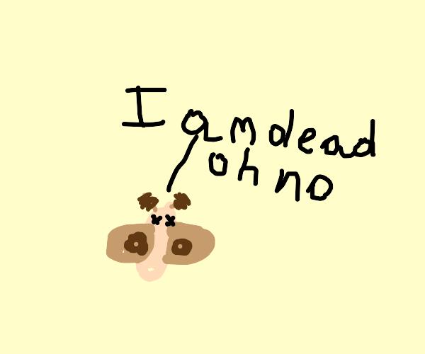 moth dies