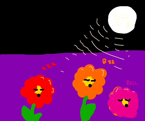 flowers sleeping under moon light