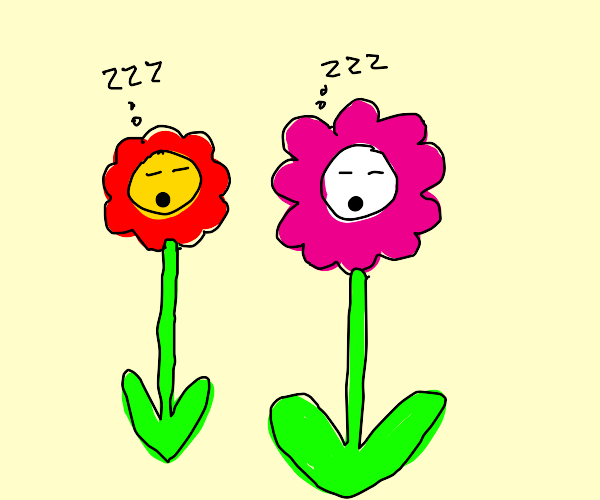 flowers are sleeping