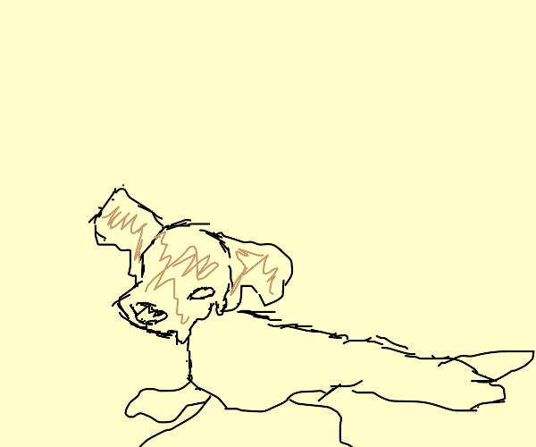 dog is melting :(