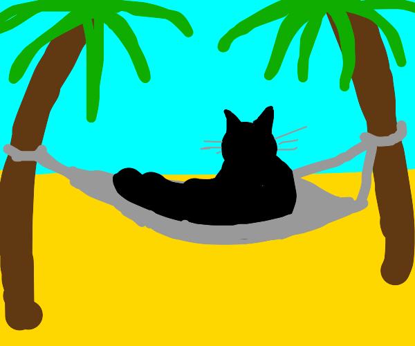 Black cat in a hammock