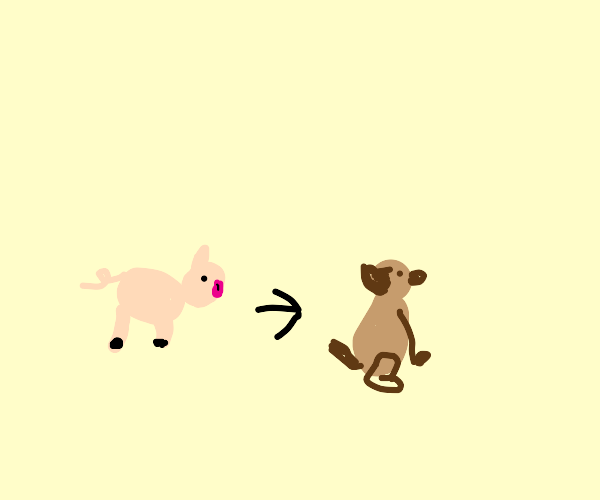 Pig can turn into dog