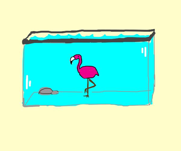 Flamingo in an Aquarium