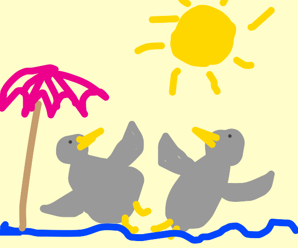 Birbs sunbathing on the beach
