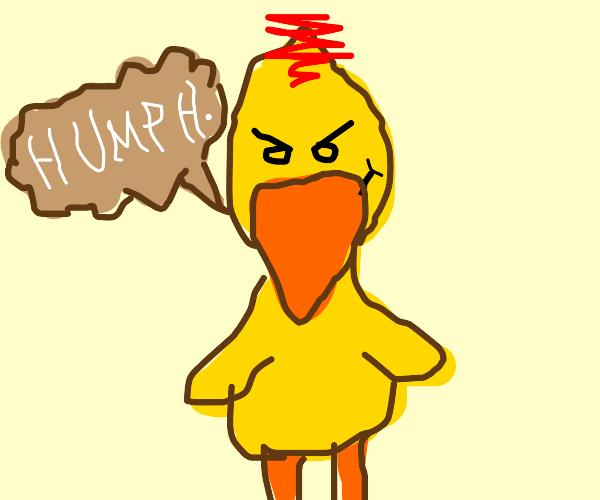 smug duck