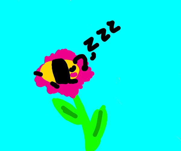 Bee naps on pink flower