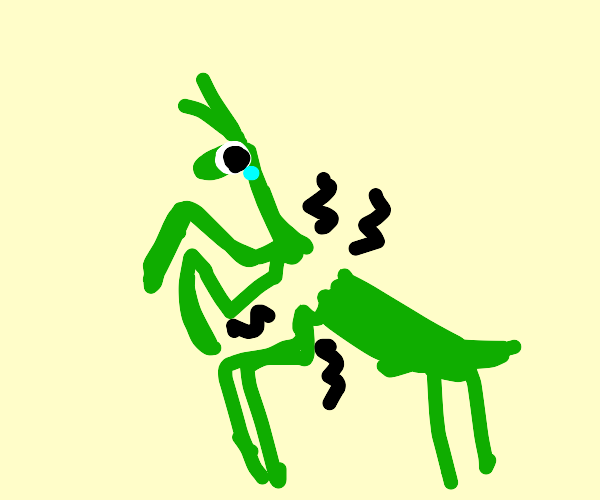 Praying Mantis breaks its back :(